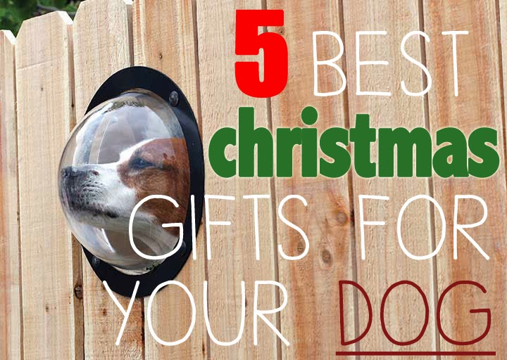 Health fitspo and inspiration 5 best christmas gifts for your dog