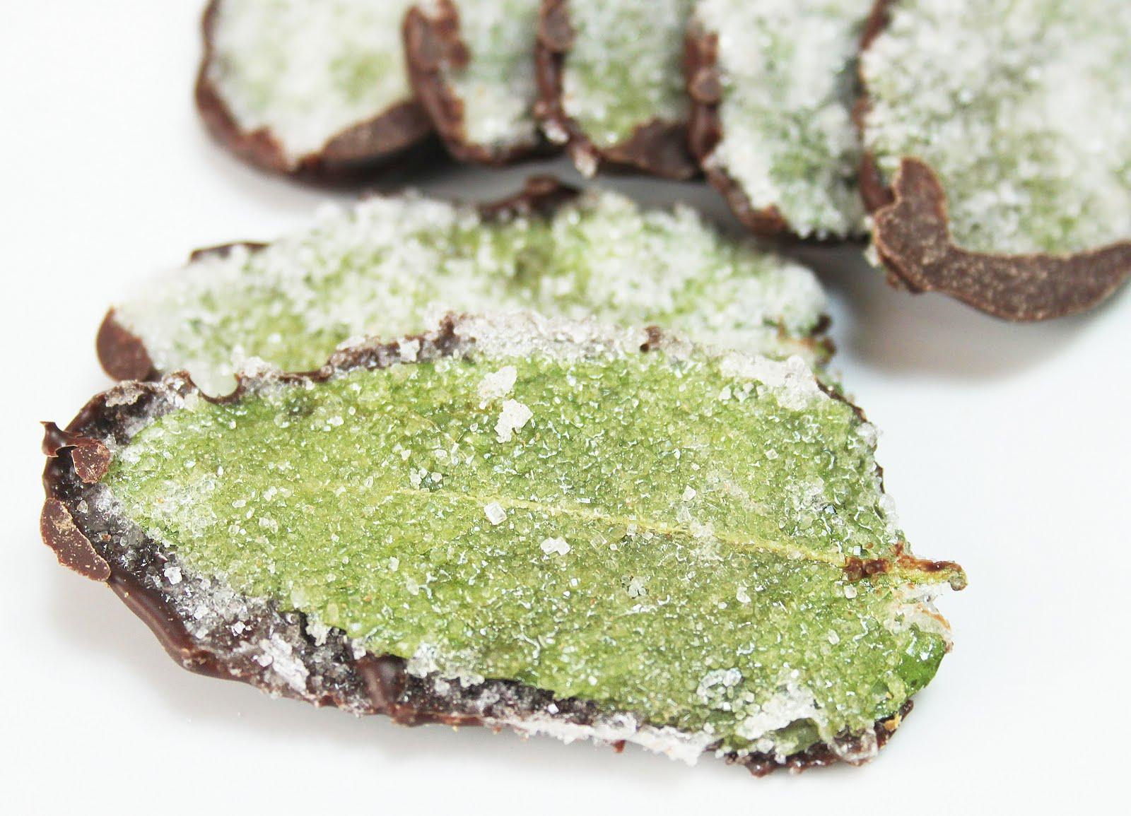 la cuisine de bernard feuilles de menthe cristallis es au chocolat. Black Bedroom Furniture Sets. Home Design Ideas