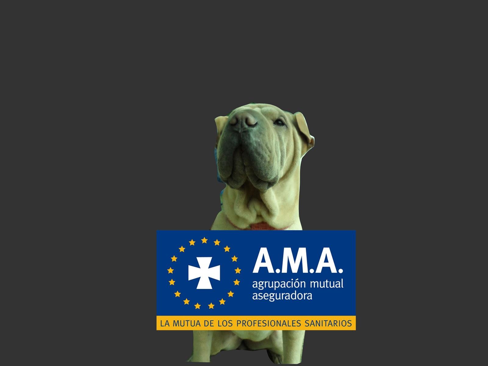 A.M.A._Seguros