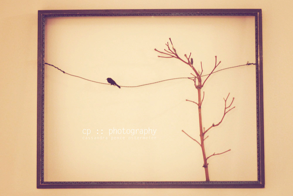 sassafras: bird on a wire :: diy :: wall decor