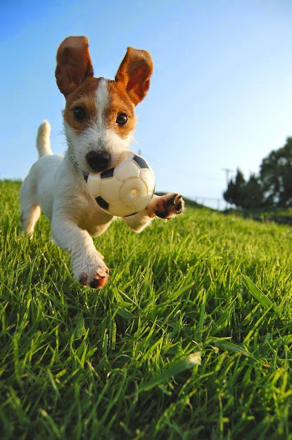 5 Fastest Dog Breeds