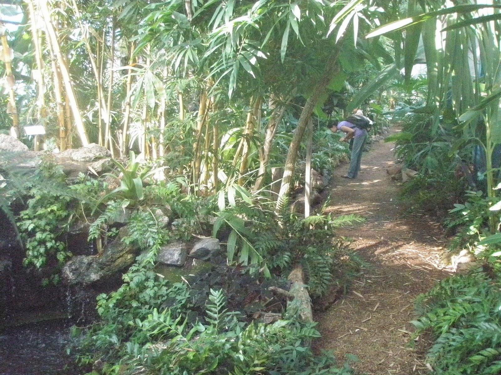 Jard n bot nico de c rdoba actividades 2013 for Talleres jardin botanico