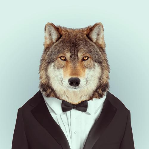 Pets Fashion