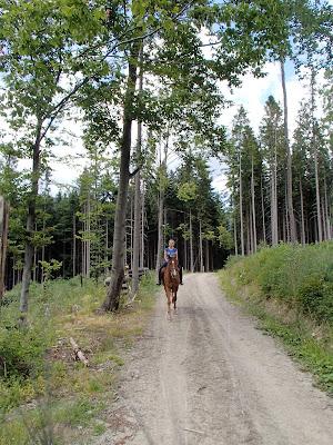 Orawa, Lipnica Wielka, Babia Góra, konie, jazda konna, trening w terenie