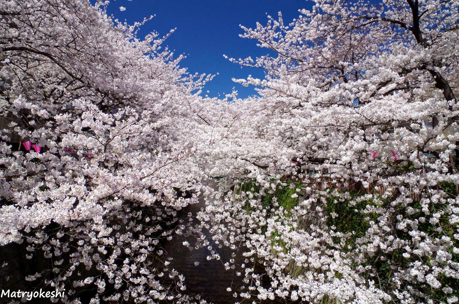 Японок заставляют раздеваться 1 фотография