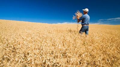 Agricultores de EE.UU. recurren en el caso de Monsanto ante el Tribunal Supremo