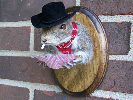 Squirrel Taxidermy Funny
