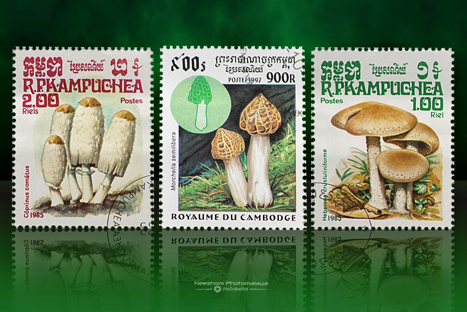 Cambodia mushrooms stamps