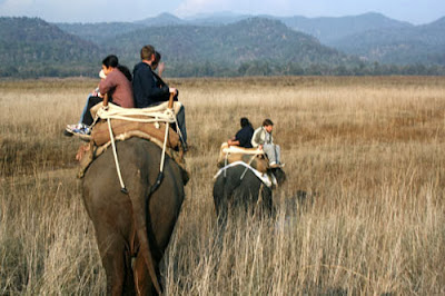 Adventurous Elephant Safari