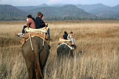 Adventurous Elephant Safari