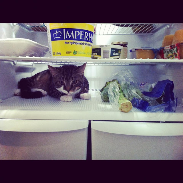 241543903 frozen cat freezer image