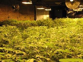 Marijuana grow kits
