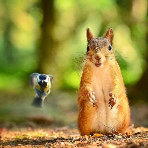 wildlife photography feeding animals konsta  punkka-7