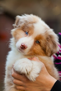 picture of beautiful dog