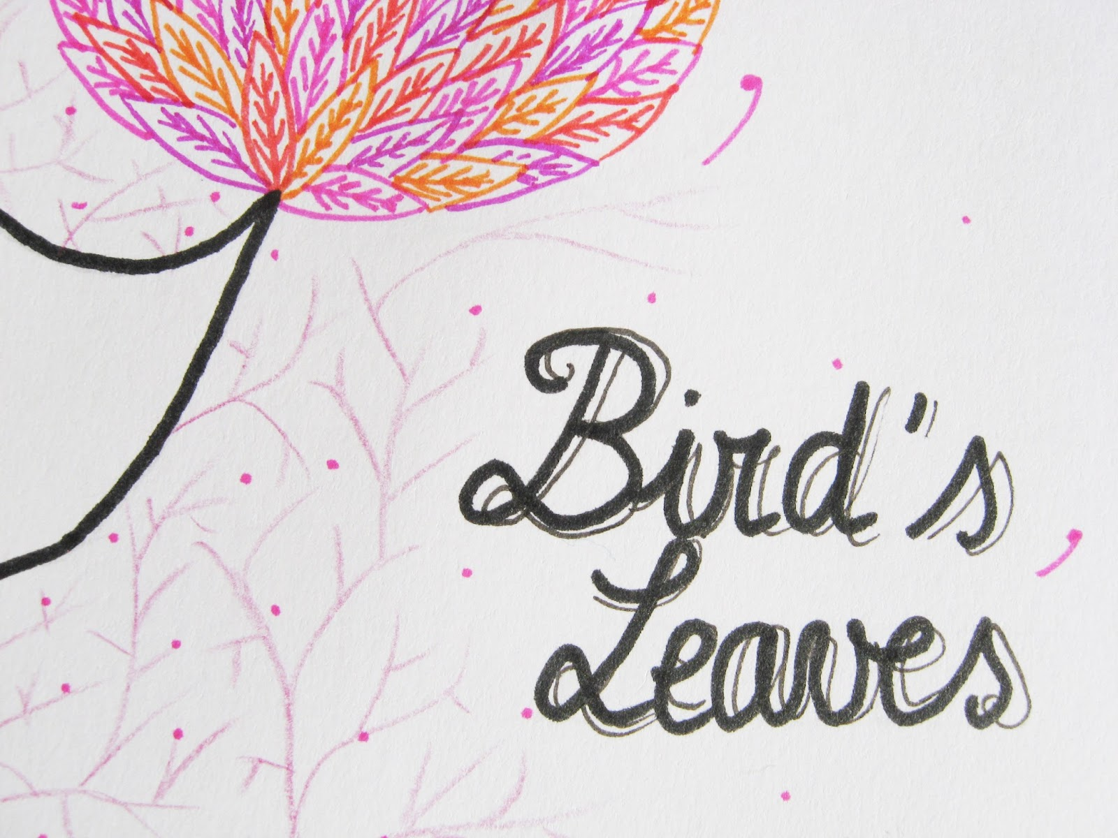 oiseau bird plumes feuilles