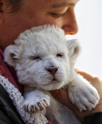 Os bebés mais fofinhos do Reino Animal em 2013