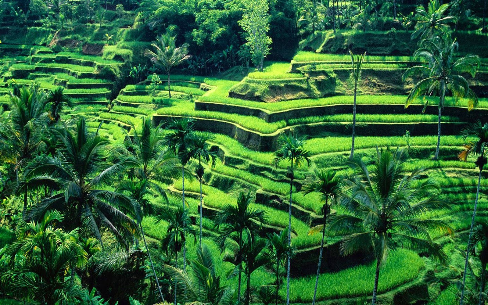 The 10 Most Stunning And Appealing Places Anyone Should Go When Touring Indonesia Victoriarud