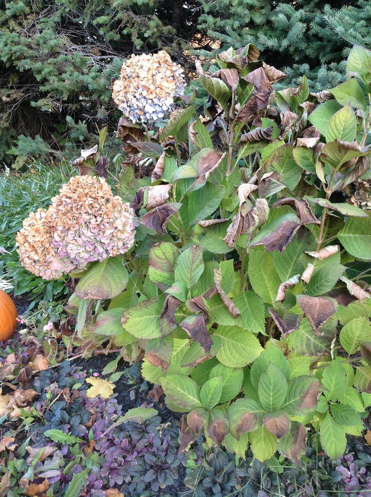 Veseys Seeds Blog Too Prune Or Not Prune