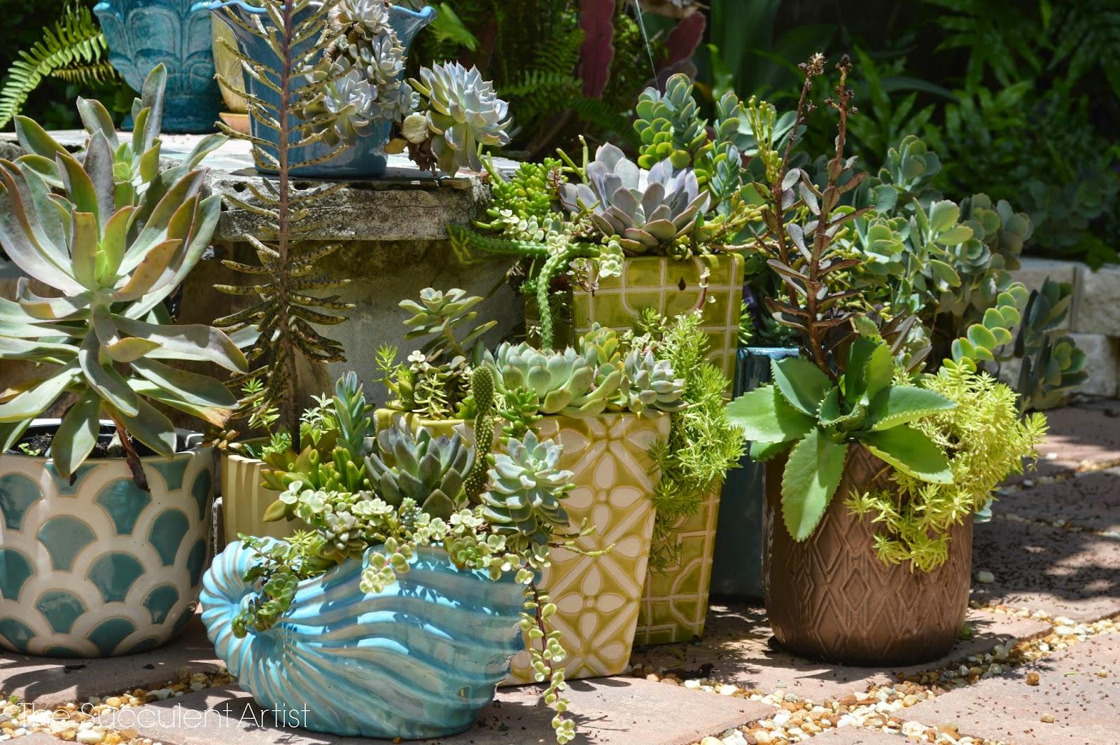 the succulent artist unique succulent and cacti planters