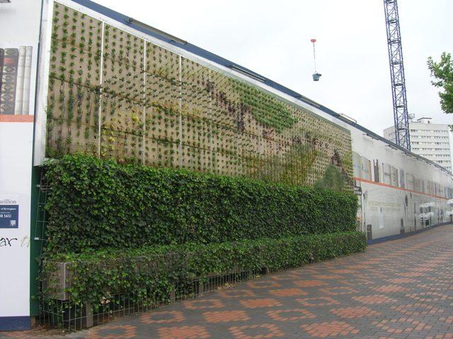 Projeto ciranda verde muros vivos alternativas para for Plantas muro verde