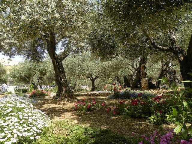 Garden Of Gethsemane, 2011 CC, Ian Scott Photo
