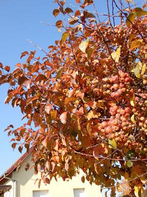 Un si bel automne ! clin d'oeil Design