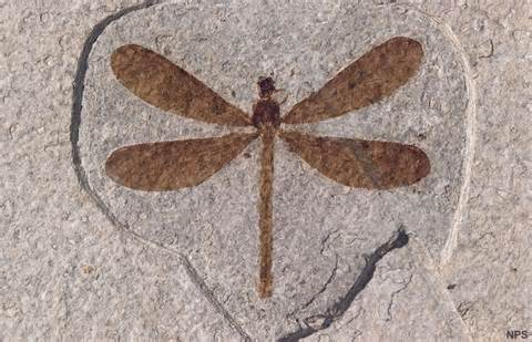 do fossil finds contradict the bible? essay Life appears abruptly and in complex forms in the fossil finds support in the king james bible that the world was created 6000 years ago in fact it.