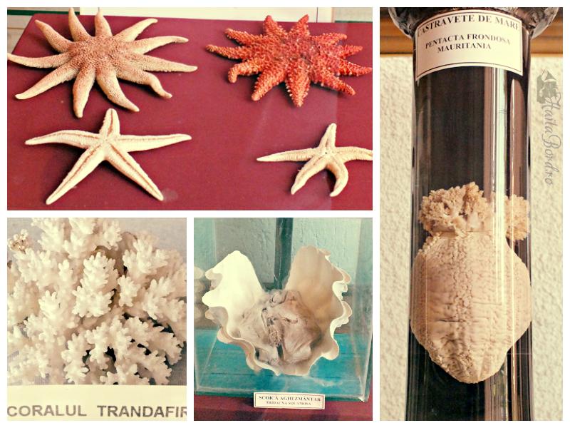 exponate muzeul apelor falticeni