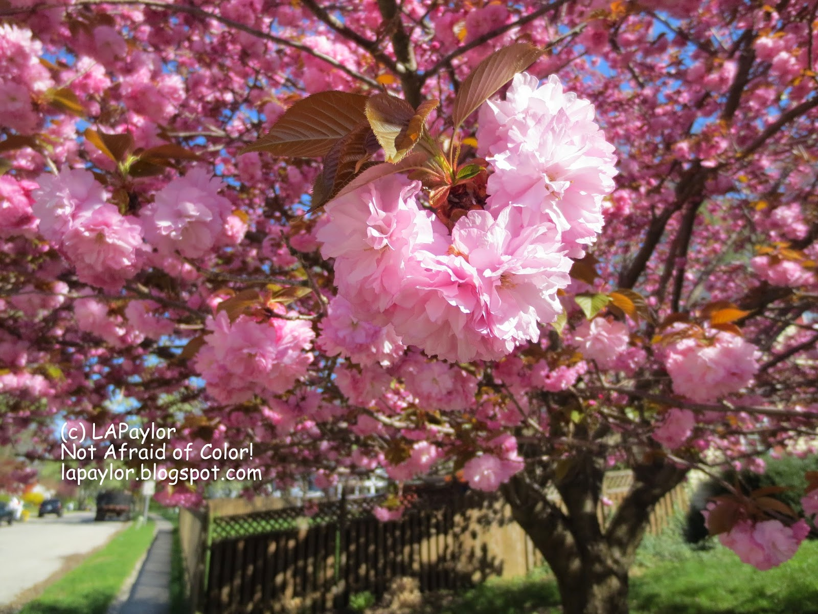 Trees that have pink flowers images flower decoration ideas trees that have pink flowers choice image flower decoration ideas trees that have pink flowers choice mightylinksfo