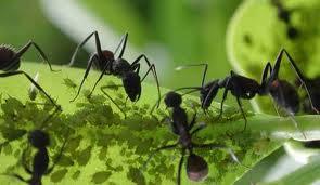 PlantaMer: Eliminar las Hormigas del Jardín