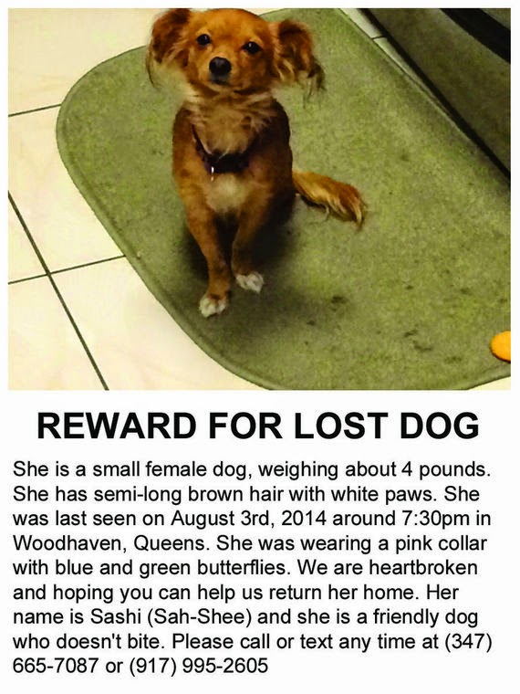 help find sashi
