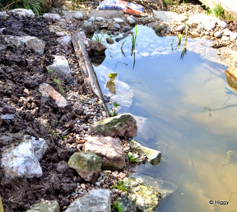 Higgy 39 s garden project as seen on bbc springwatch wildlife pond build continues and leads - Build pond wildlife haven ...