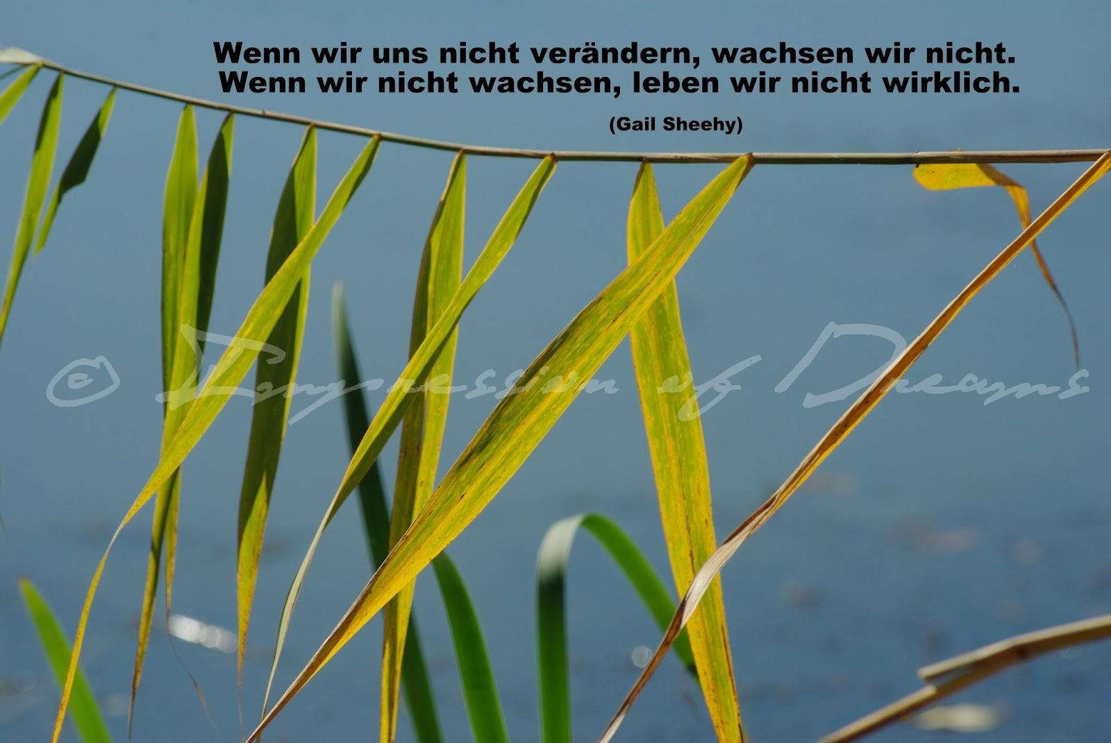 Wenn wir uns nicht verändern, wachsen wir nicht. Wenn wir nicht wachsen, leben wir nicht wirklich.