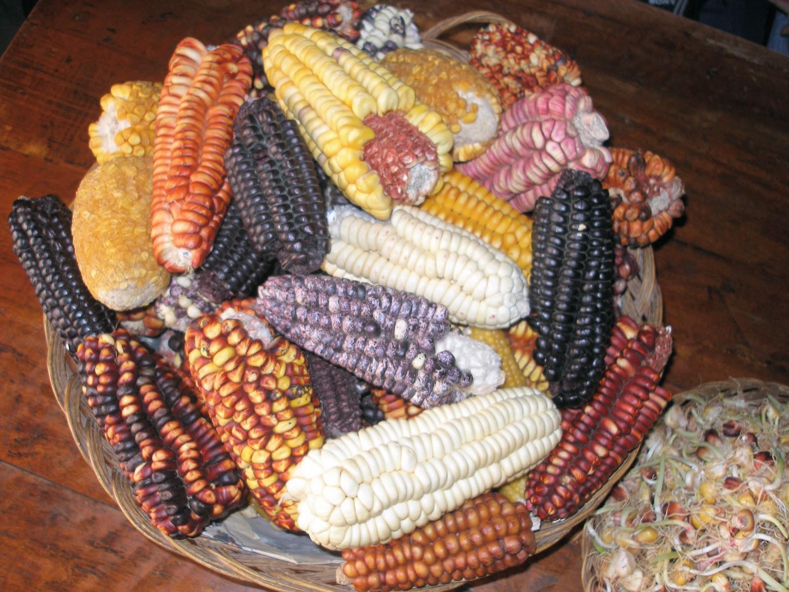 The Food Timeline-Aztec, Maya Inca foods Pictures of the aztecs food