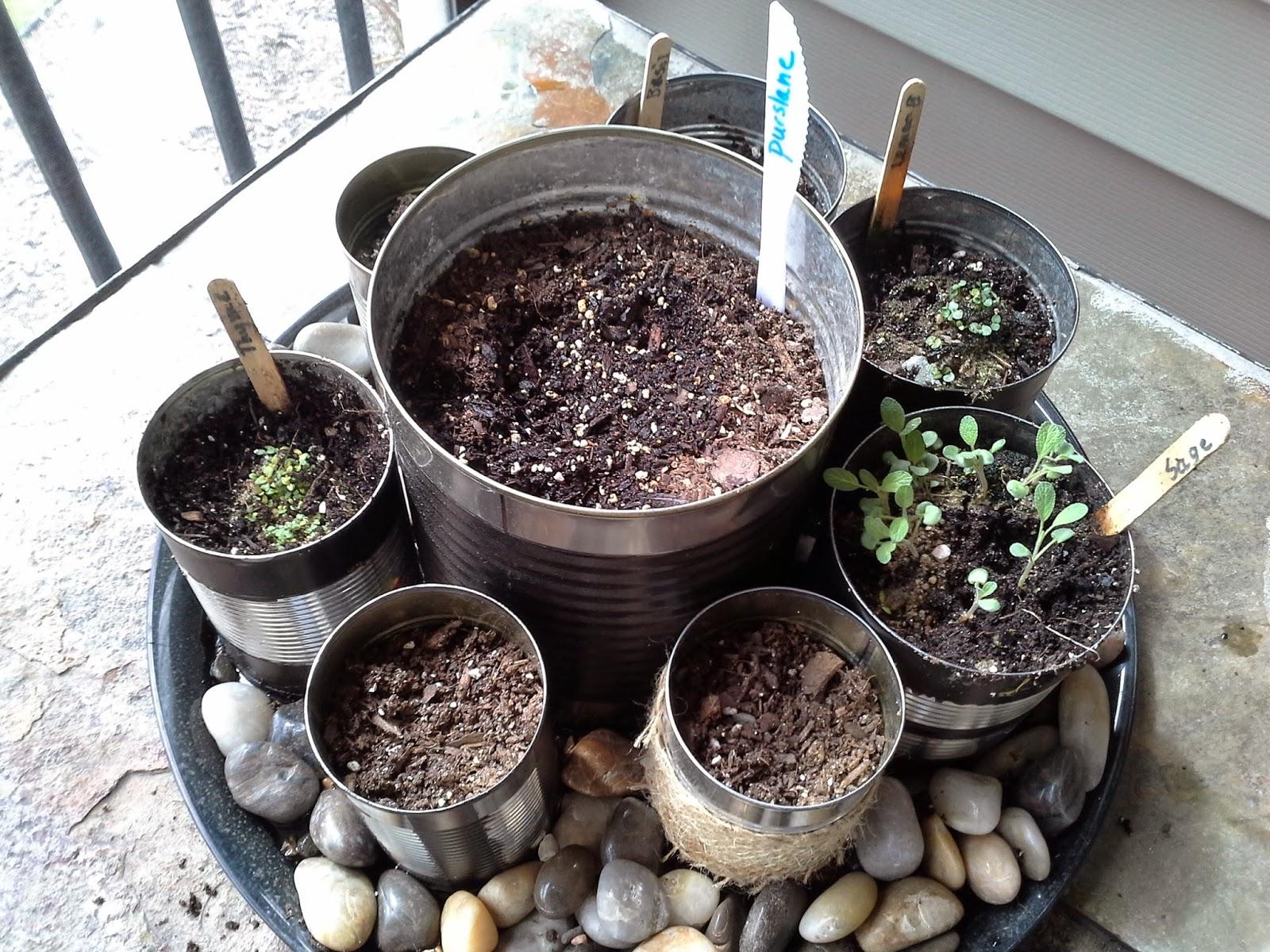 DIY herb garden easy