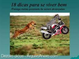 zebra de moto