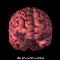 3d Brain2