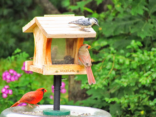 spring birds on feeder