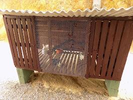 Casa dos coelhos!