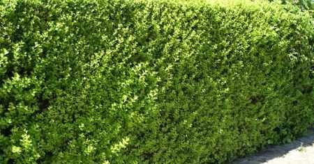 Arte Y Jardiner A Dise O De Jardines Poda Gu A