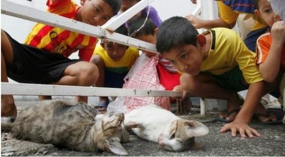Gambar Menyayat Hati 2 Ekor Kucing Mati Ketika Cuba Selamatkan Diri