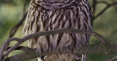 Salish sea news and weather 7 24 oil terminal ok 39 d for Do owls eat fish