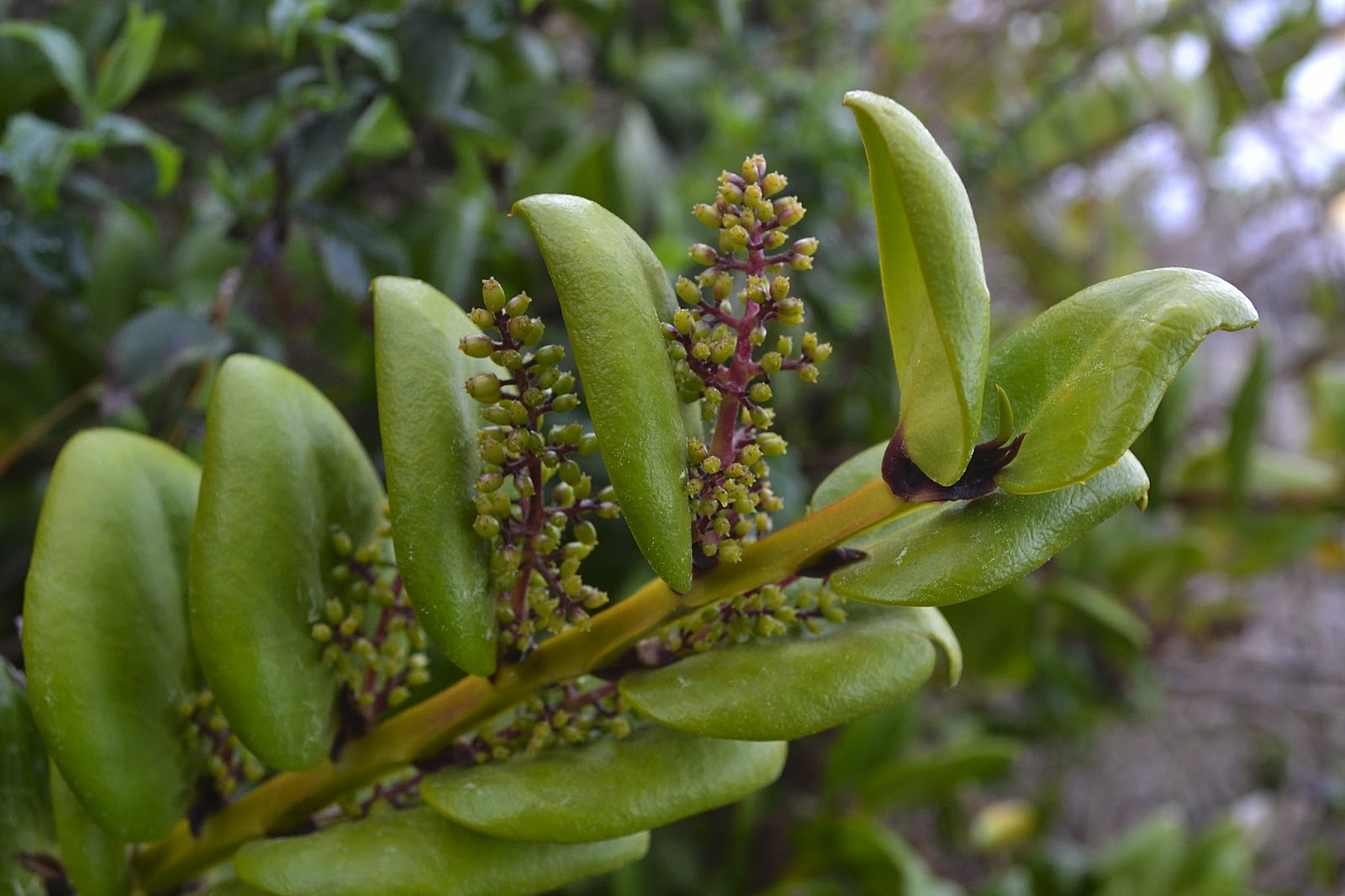 Ndice de plantas trepadoras plantas trepadoras ep fitas - Plantas trepadoras de sol ...