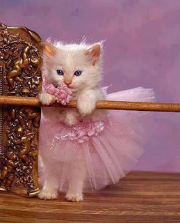 una bella bailarina gatita