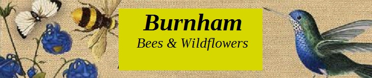 Burnham Bees & Wildflowers