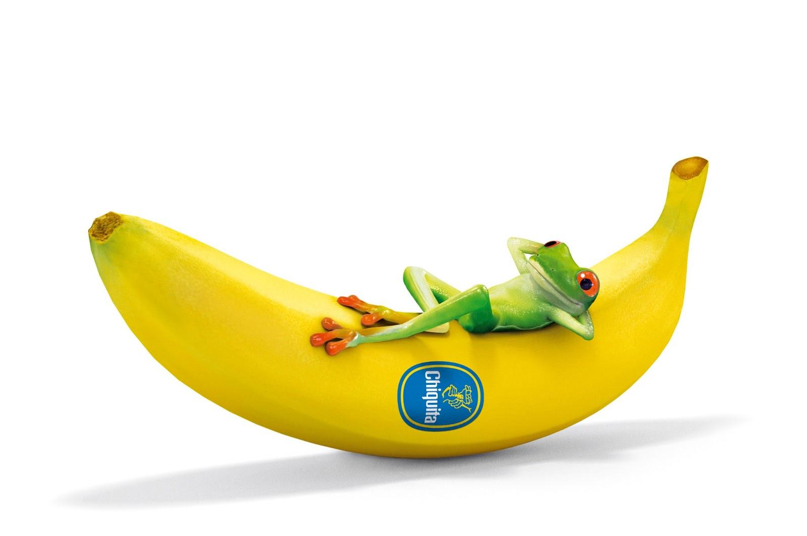Funny Frog Sleeping on Banana