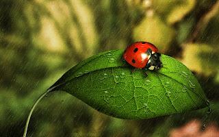 Ladybug Green Leaf Nature HD Wallpaper