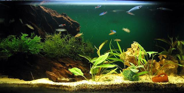 """тематическое занятие по биологии """"Как спят рыбы"""""""
