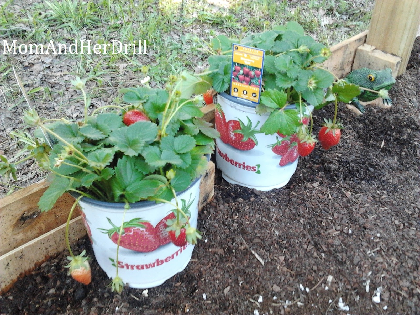 Youtube vertical gardening ideas photograph vertical veget for Strawberry garden designs