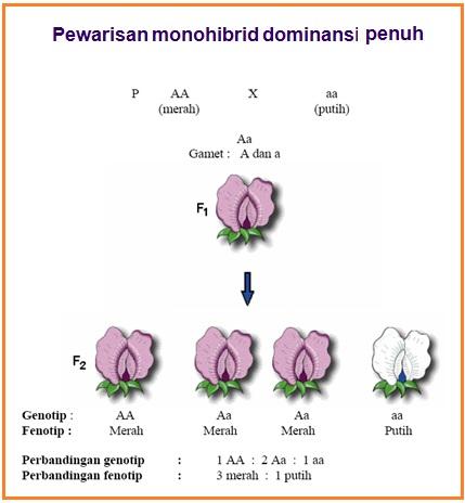 Biologi Gonzaga Mendelism